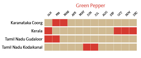 harvest-calendar-green-pepper