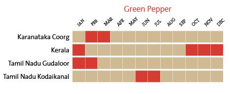 harvest-calendar-green-pepper